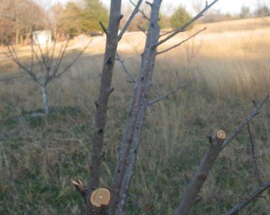 Pruning Time!