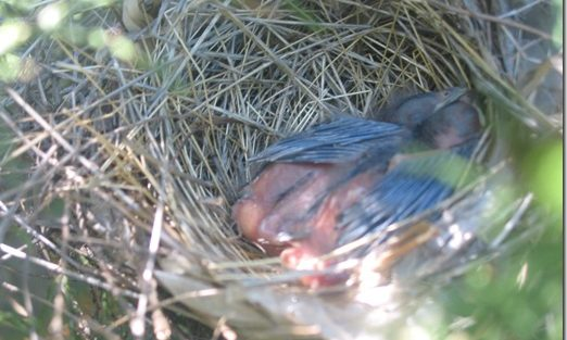 Baby Bird Giveaway!