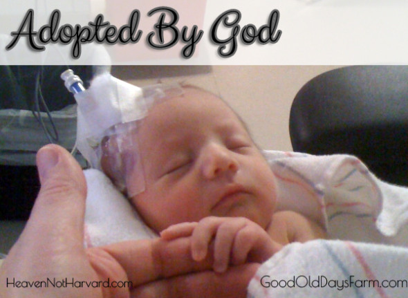 Adopted By God: A Mother's Journey through the adoption of a premature baby.
