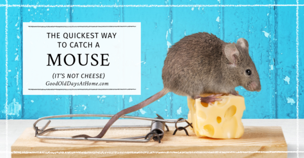 Got a Mouse?  This is the BEST Mouse Traps Bait We've Found