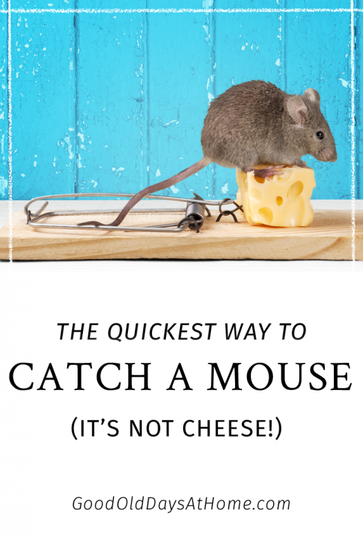 best mouse traps bait for best way rid home mice