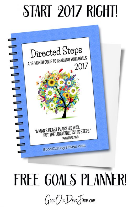 Directed Steps Goals Planner
